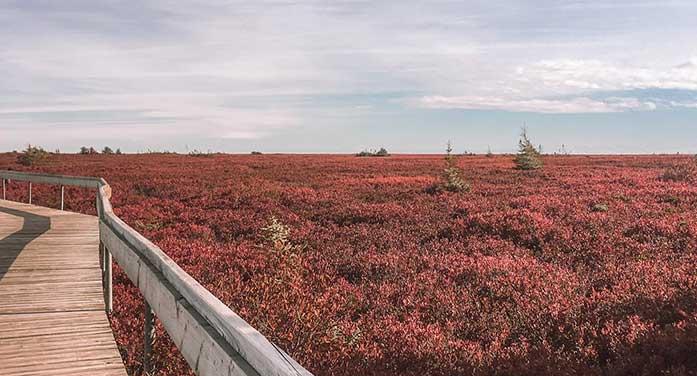 New Brunswick's Acadia region a hidden gem